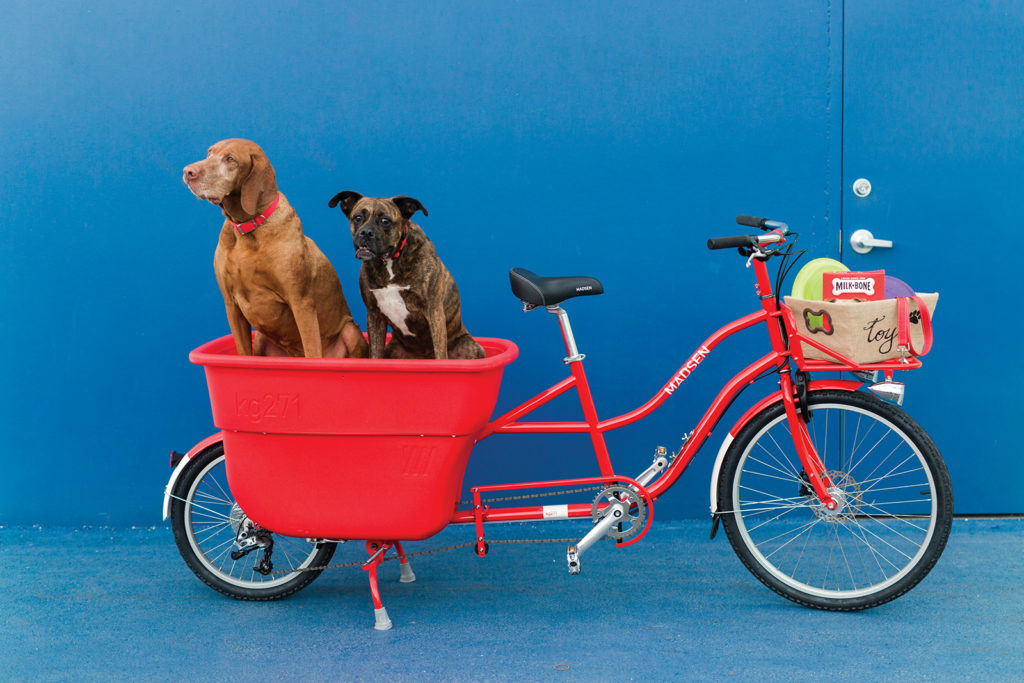 2 dogs ride in a Madsen Cycles bucket bike