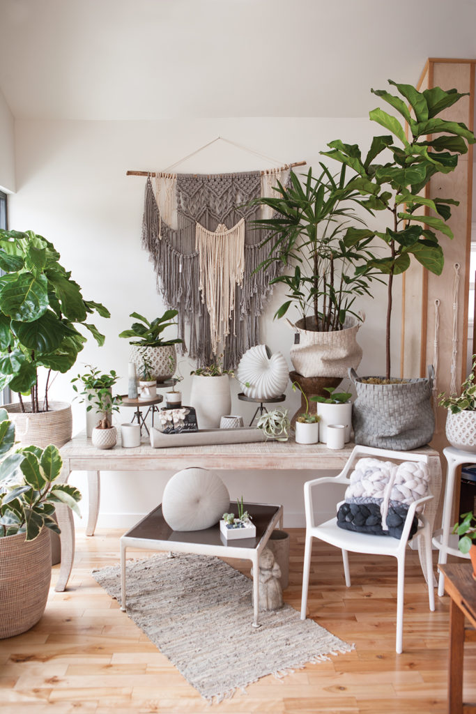 Thyme and Place, indoor plants, neutral colors